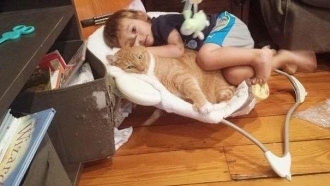 Картинки по запросу Брошенный кот Ларри обрёл новый дом и стал няней этому маленькому мальчику  Больше на: https://4tololo.ru/content/10939