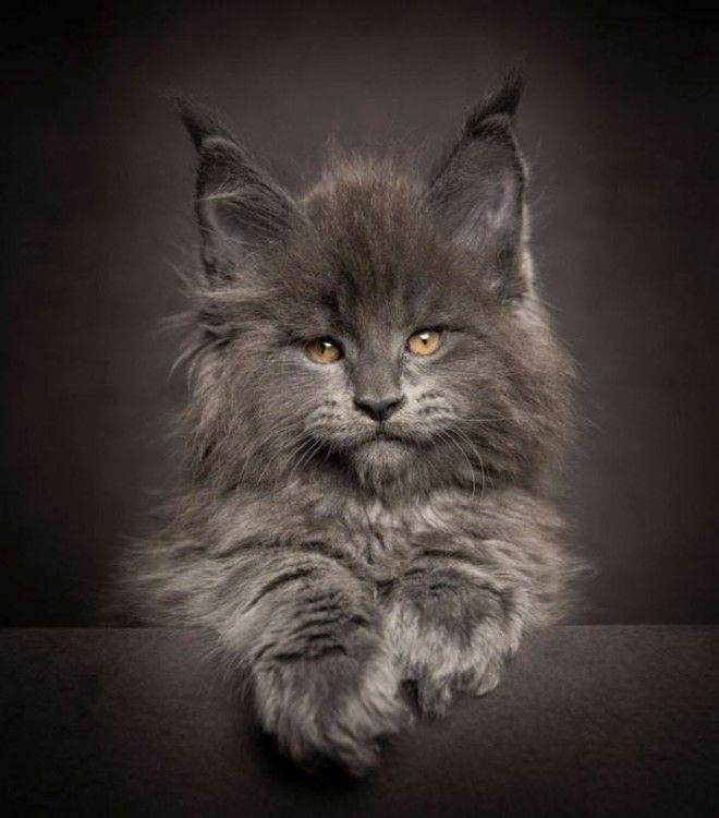 Запоминают ли коты