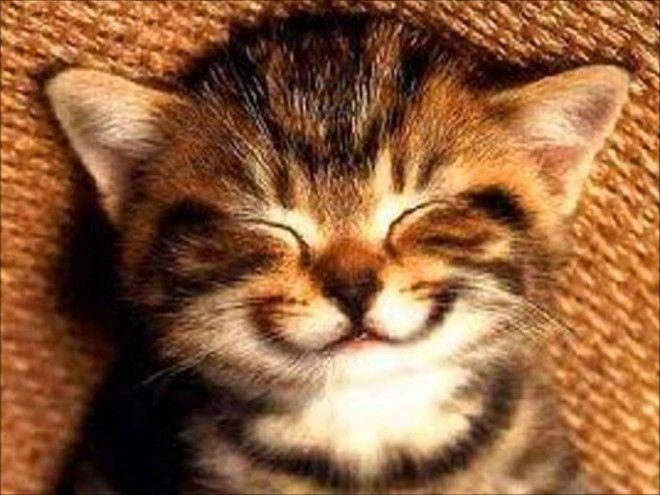 Что такое урчание котов