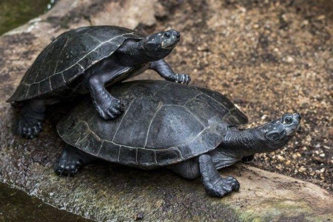 10. Очень шумные черепахи животные, животный мир, интересные факты, интересные факты для детей, познавательные факты, природа, факты о животных, хочу все знать