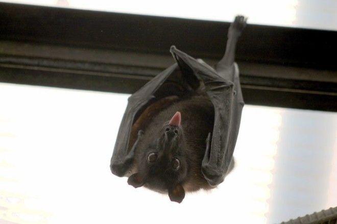 7. Популяция летучих мышей животные, животный мир, интересные факты, интересные факты для детей, познавательные факты, природа, факты о животных, хочу все знать