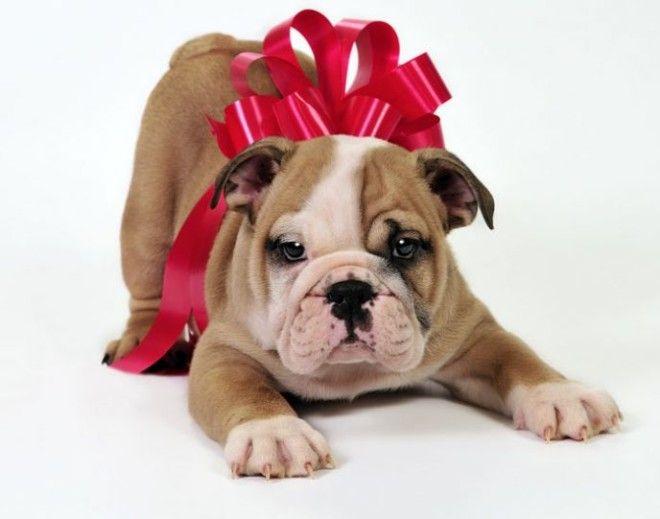 Идеи для подарков к Новому году для каждого знака зодиака