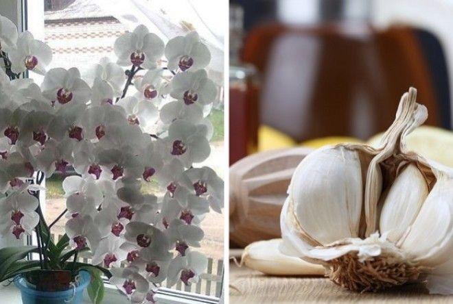 Картинки по запросу орхидеи на моем окне